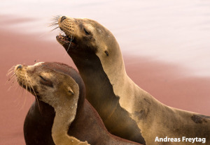 island_hopping_sea_lions